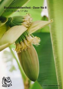 bananenbluetenfest_oaseno8_jeschaunig_graz_web